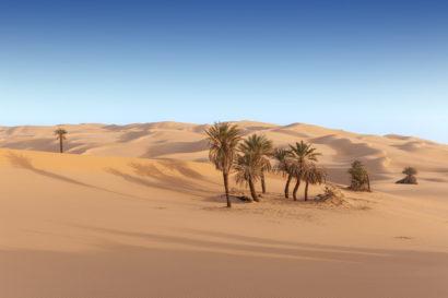 db-316-desert-aa-04-1173
