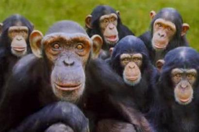 monkeys-featured